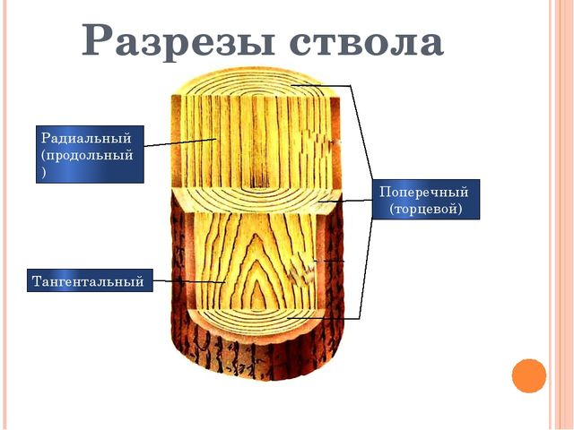 Разрезы ствола Поперечный (торцевой) Радиальный (продольный) Тангентальный