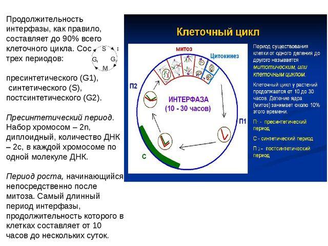 Продолжительность интерфазы, как правило, составляет до 90% всего клеточного...