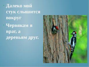 Далеко мой стук слышится вокруг Червякам я враг, а деревьям друг.