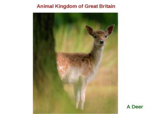A Deer Animal Kingdom of Great Britain