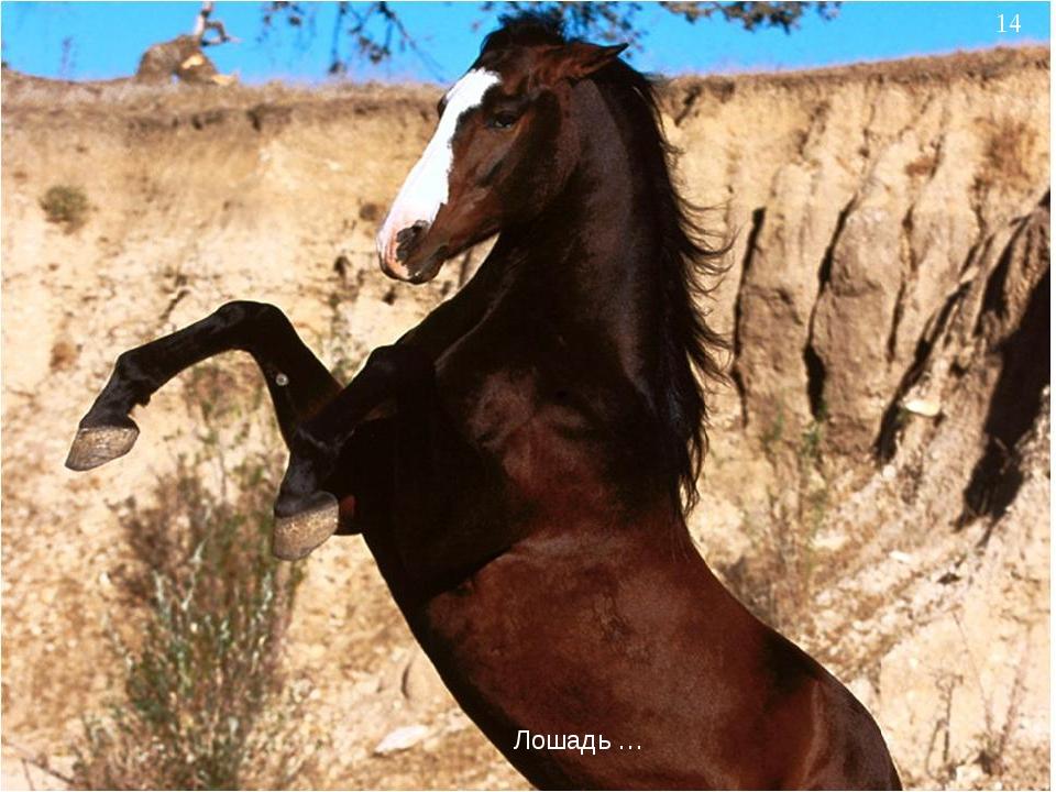 * Лошадь …