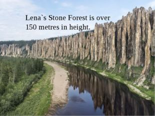 Lena`s Stone Forest is over 150 metres in height.