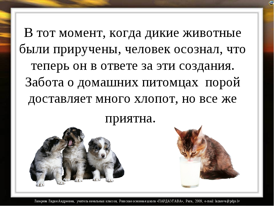 В тот момент, когда дикие животные были приручены, человек осознал, что тепер...