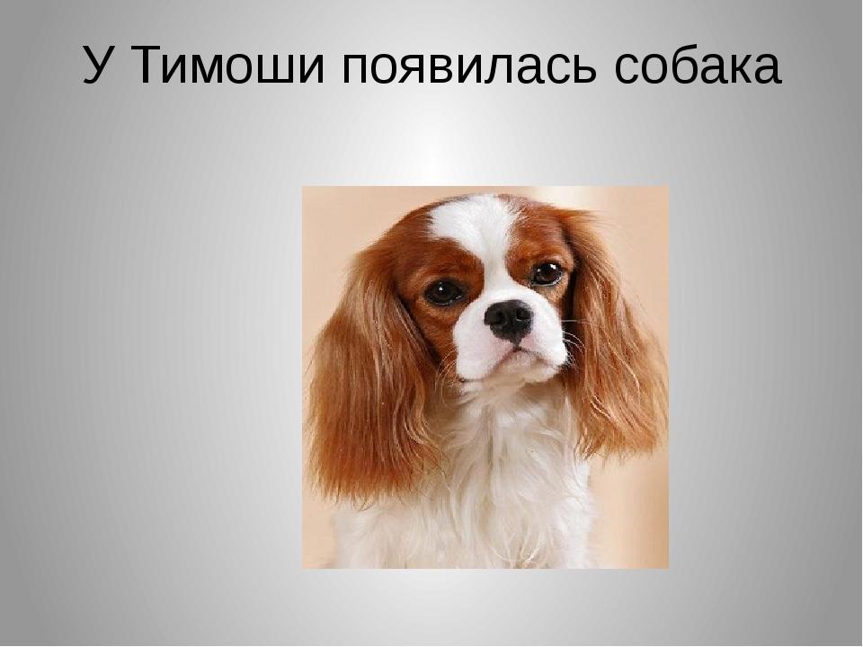 У Тимоши появилась собака