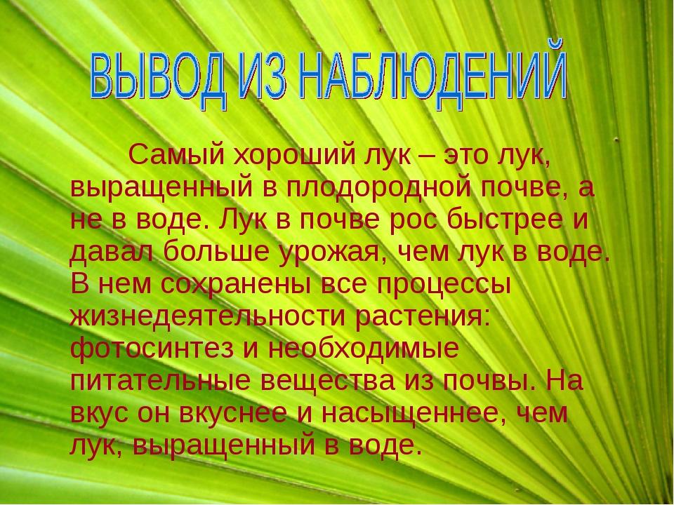 Самый хороший лук – это лук, выращенный в плодородной почве, а не в воде. Лу...