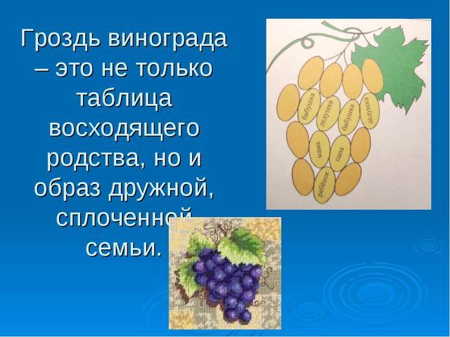 Гроздь винограда – это не только таблица восходящего родства, но и образ друж...