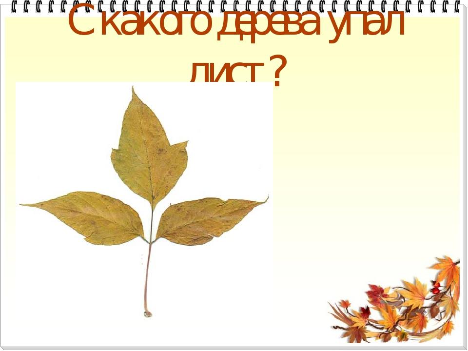 С какого дерева упал лист?