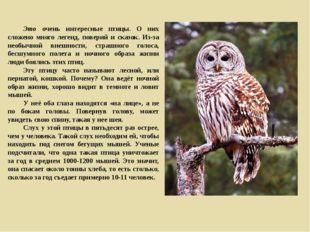 Это очень интересные птицы. О них сложено много легенд, поверий и сказок. Из