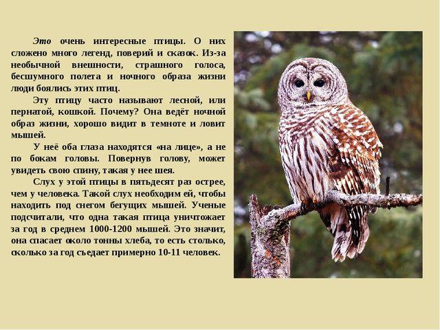 Это очень интересные птицы. О них сложено много легенд, поверий и сказок. Из...