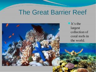 The Great Barrier Reef It`s the largest collection of coral reefs in the wor