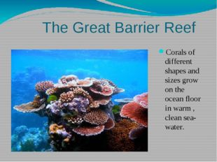 The Great Barrier Reef Corals of different shapes and sizes grow on the ocea