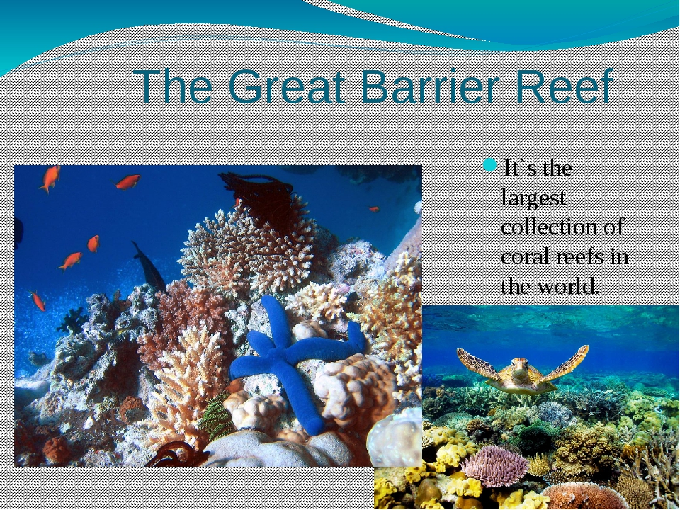 The Great Barrier Reef It`s the largest collection of coral reefs in the wor...