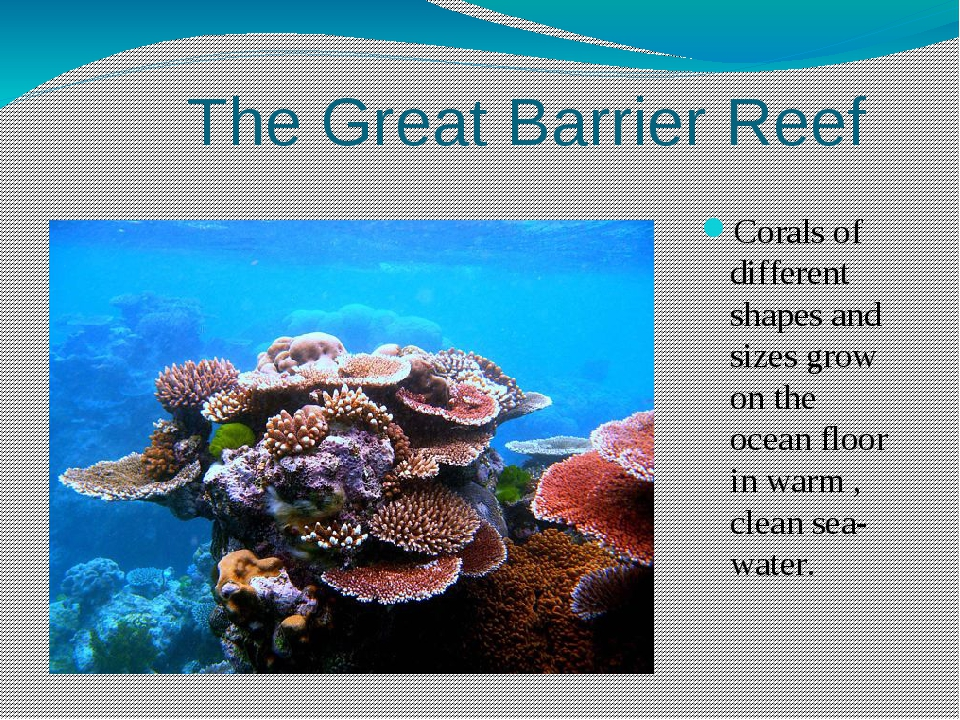 The Great Barrier Reef Corals of different shapes and sizes grow on the ocea...