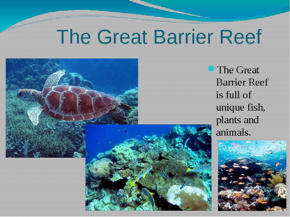 The Great Barrier Reef The Great Barrier Reef is full of unique fish, plants...