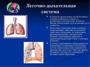 Легочно-дыхательная система В области дыхательных путей большого сечения раз