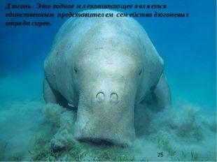 Дюгонь . Это водное млекопитающее является единственным представителем семейс