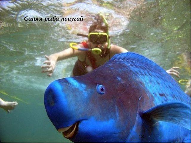 Синяя рыба-попугай
