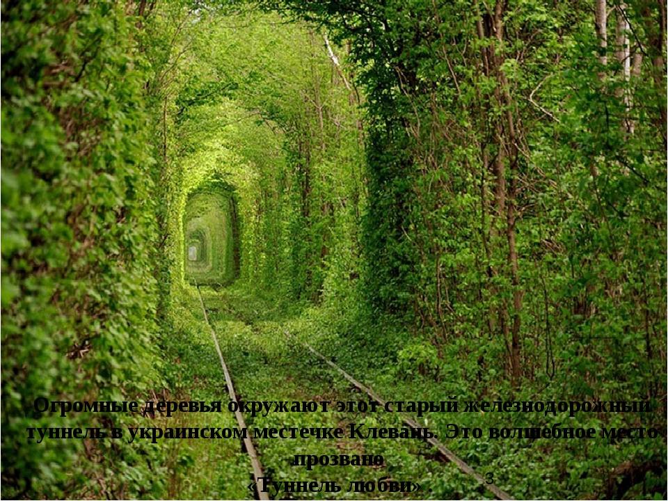 Огромные деревья окружают этот старый железнодорожный туннель в украинском ме...