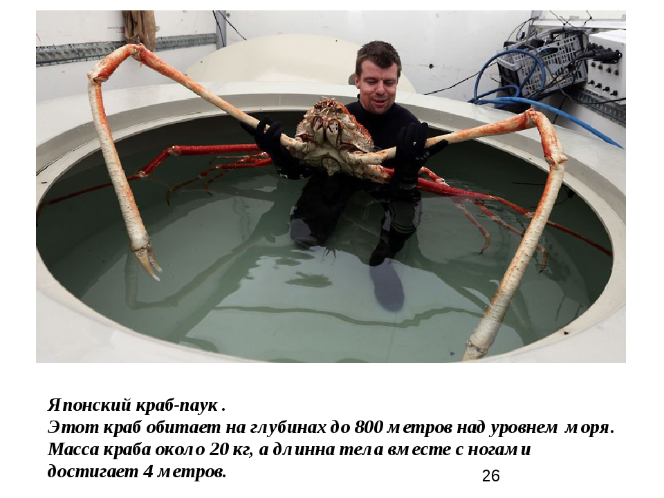Японский краб-паук . Этот краб обитает на глубинах до 800 метров над уровнем...