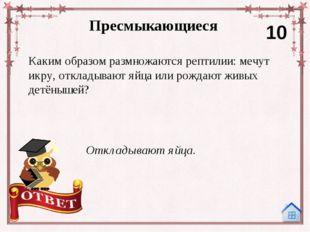 Интернет-ресурсы Сова: http://serp-dm.ru/_nw/0/71629456.jpg Лента: http://pix