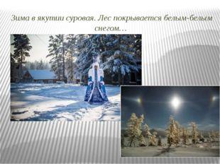 Зима в якутии суровая. Лес покрывается белым-белым снегом…