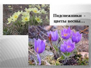 Подснежники - цветы весны…