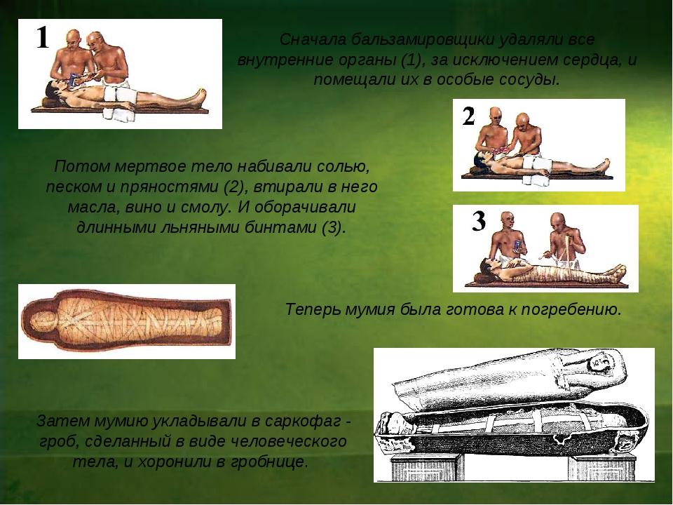 Теперь мумия была готова к погребению. Сначала бальзамировщики удаляли все в...