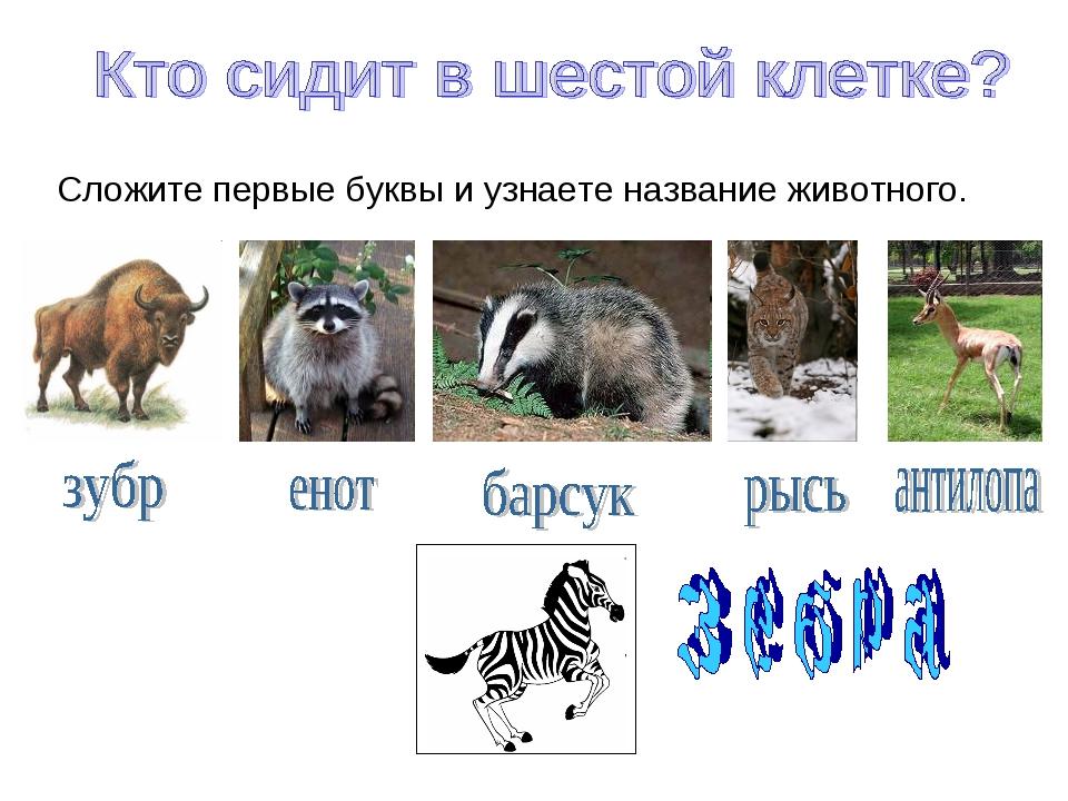Сложите первые буквы и узнаете название животного.