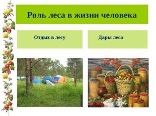 Роль леса в жизни человека Дары леса Отдых в лесу