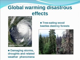 Global warming disastrous effects ■ Tree-eating wood beetles destroy forests