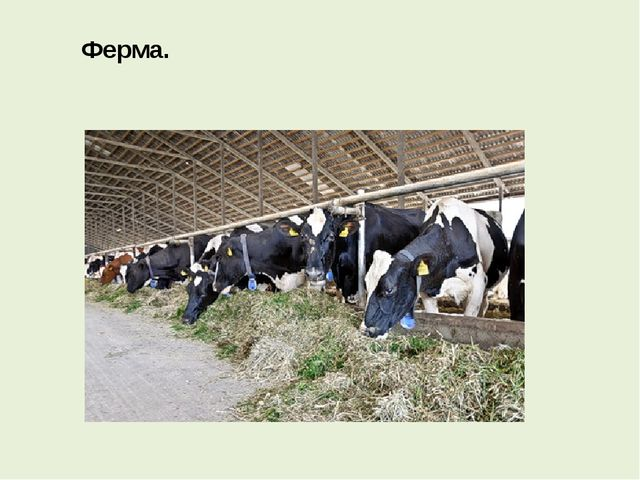 Ферма.