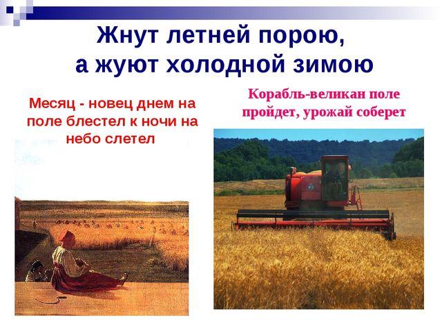 Жнут летней порою, а жуют холодной зимою Корабль-великан поле пройдет, урожай...