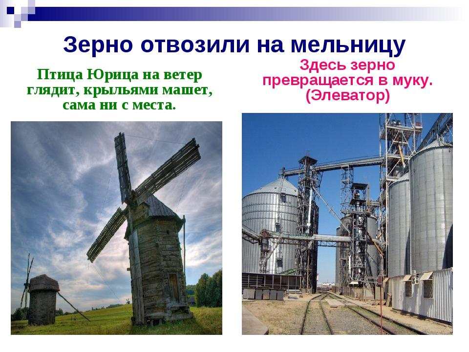 Зерно отвозили на мельницу Птица Юрица на ветер глядит, крыльями машет, сама...
