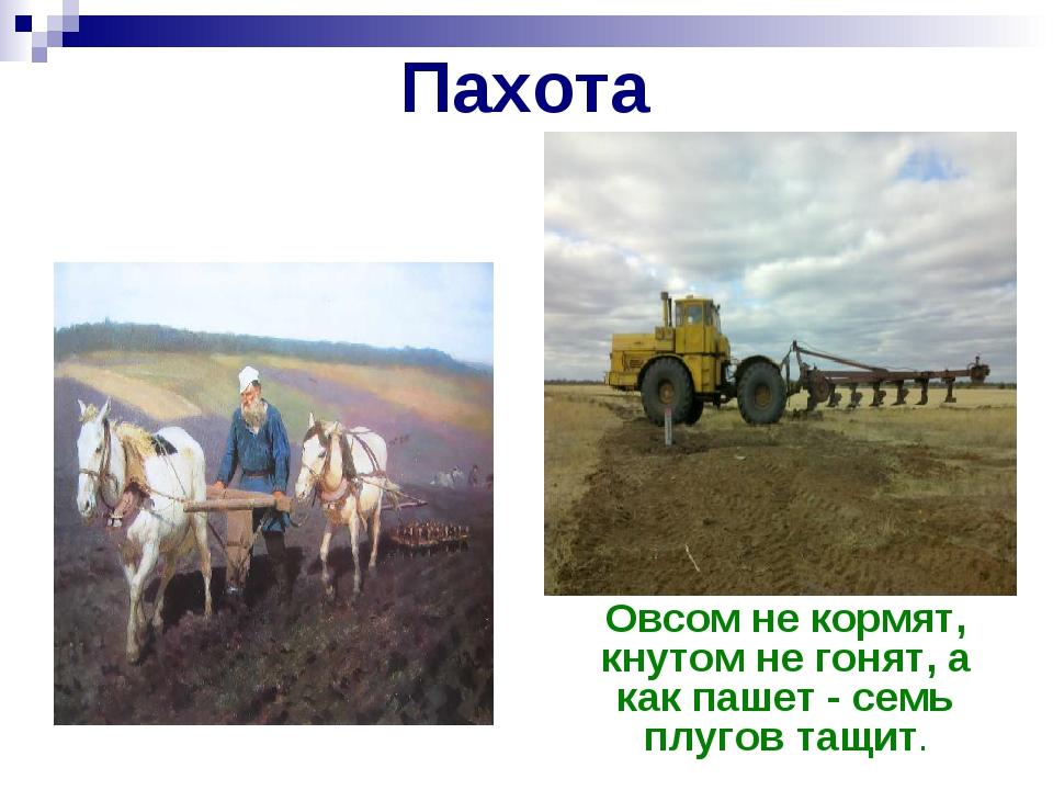 Пахота Один с сошкой, а пятеро с ложкой Овсом не кормят, кнутом не гонят, а к...
