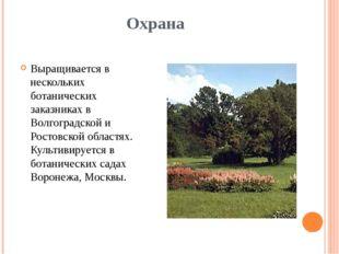Охрана Выращивается в нескольких ботанических заказниках в Волгоградской и Ро
