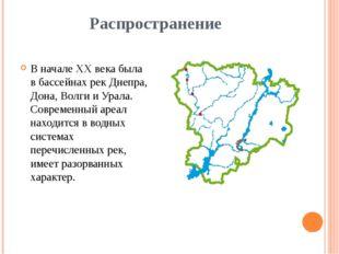 Распространение В начале XX века была в бассейнах рек Днепра, Дона, Волги и У
