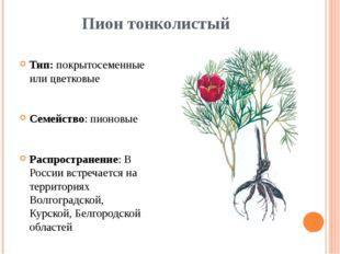 Пион тонколистый Тип: покрытосеменные или цветковые Семейство: пионовые Распр
