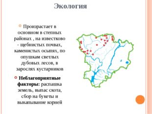 Экология Произрастает в основном в степных районах , на известково - щебнисты