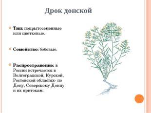 Дрок донской Тип: покрытосеменные или цветковые. Семейство: бобовые. Распрост