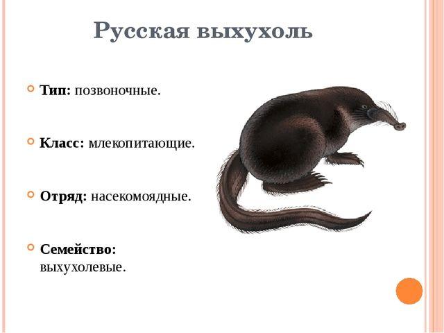 Русская выхухоль Тип: позвоночные. Класс: млекопитающие. Отряд: насекомоядные...