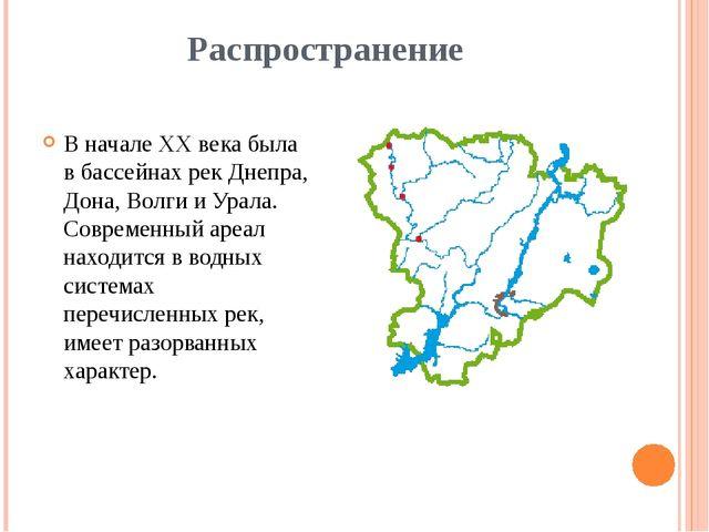 Распространение В начале XX века была в бассейнах рек Днепра, Дона, Волги и У...