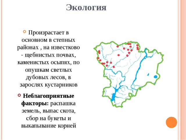 Экология Произрастает в основном в степных районах , на известково - щебнисты...