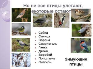 Но не все птицы улетают, некоторые остаются. Сойка Синица Ворона Свиристель Г