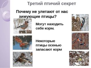 Третий птичий секрет Почему не улетают от нас зимующие птицы? Могут находить