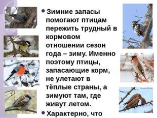 Зимние запасы помогают птицам пережить трудный в кормовом отношении сезон го