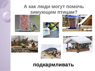 А как люди могут помочь зимующим птицам? подкармливать