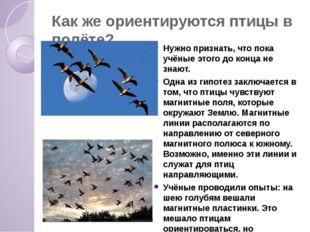 Как же ориентируются птицы в полёте? Нужно признать, что пока учёные этого до
