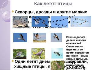 Как летят птицы Скворцы, дрозды и другие мелкие птицы летят скученной стаей.