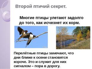 Второй птичий секрет. Многие птицы улетают задолго до того, как исчезнет их к