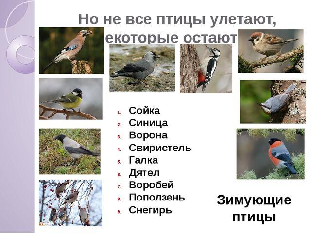Но не все птицы улетают, некоторые остаются. Сойка Синица Ворона Свиристель Г...